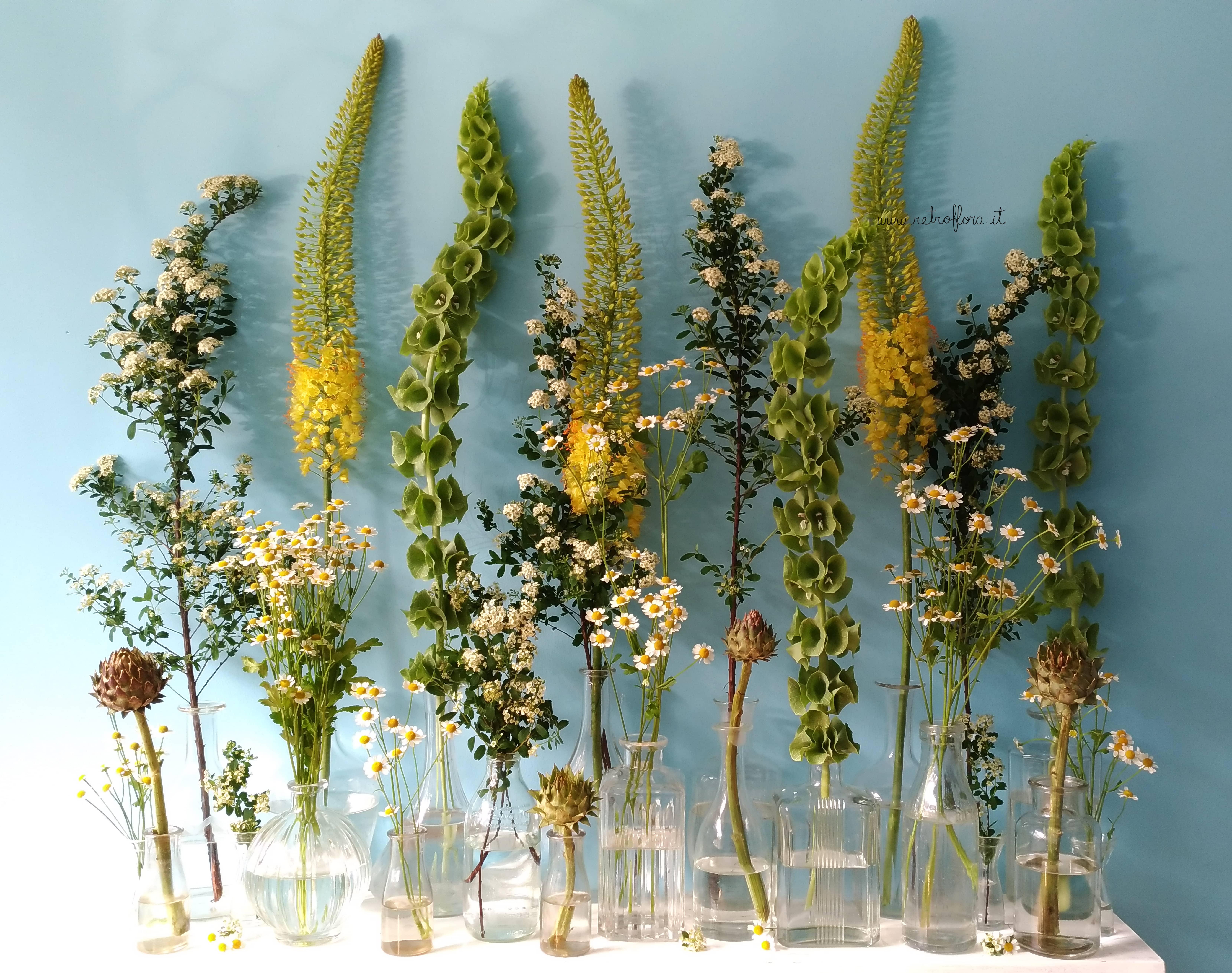 La Mensola Fiorita Molucella e Eremurus - Retroflora